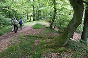Naturschutzgebiet Kahle Haardt bei Scheid am Edersee, Nordhessen, Hessen, Deutschland | nature reserve Kahle Haardt near Scheid on Lake Eder, Hesse, Germany