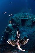 Israel, Eilat, Red Sea, - Underwater photograph of a common Lionfish Pterois miles A sunken ship in the background