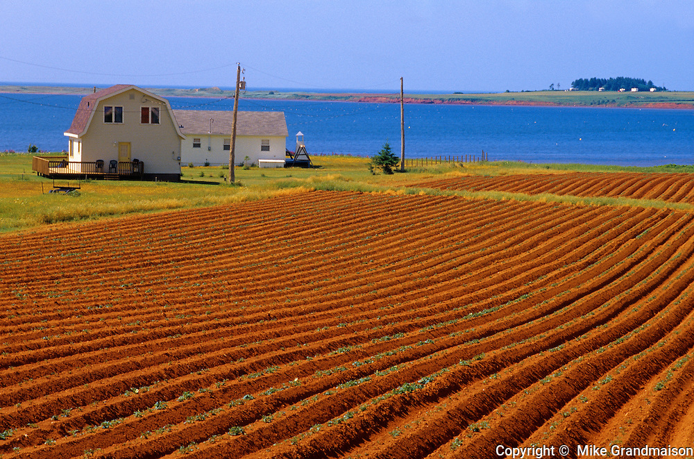 Very early growth potatoes on red soil with Gulf of St. LAwrence<br /> Near Cape Tryon<br /> Prince Edward Island<br /> Canada