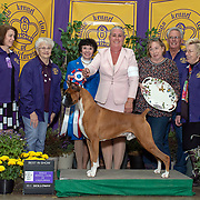 Kings Kennel Club 03/09/2019