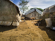 07 NOVEMBER 2014 - SITTWE, RAKHINE, MYANMAR: A dog walks past a tent in a Rohingya Muslim IDP camp near Sittwe. After sectarian violence devastated Rohingya communities and left hundreds of Rohingya dead in 2012, the government of Myanmar forced more than 140,000 Rohingya Muslims who used to live in and around Sittwe, Myanmar, into squalid Internal Displaced Persons camps. The government says the Rohingya are not Burmese citizens, that they are illegal immigrants from Bangladesh. The Bangladesh government says the Rohingya are Burmese and the Rohingya insist that they have lived in Burma for generations. The camps are about 20 minutes from Sittwe but the Rohingya who live in the camps are not allowed to leave without government permission. They are not allowed to work outside the camps, they are not allowed to go to Sittwe to use the hospital, go to school or do business. The camps have no electricity. Water is delivered through community wells. There are small schools funded by NOGs in the camps and a few private clinics but medical care is costly and not reliable.   PHOTO BY JACK KURTZ