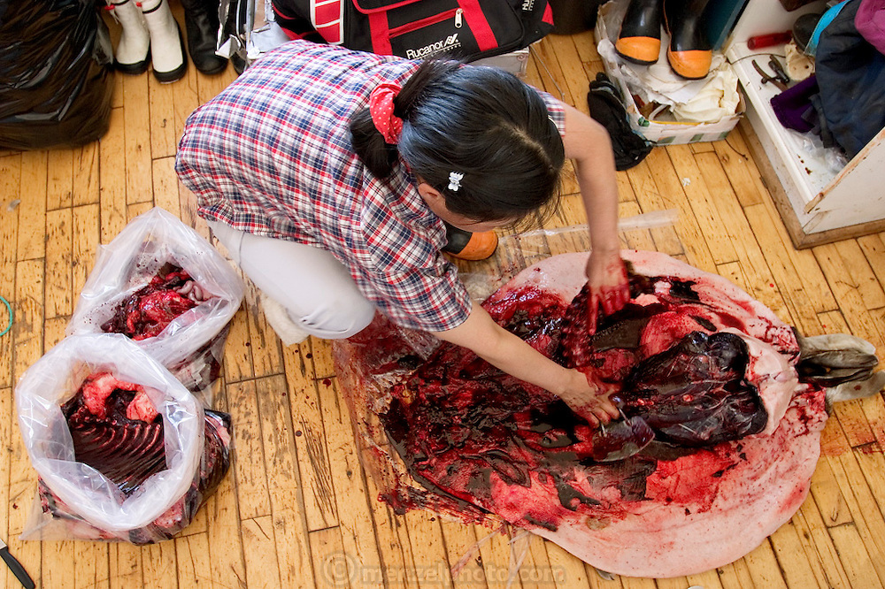 (MODEL RELEASED IMAGE). Erika Madsen begins to clean the seal her husban Emil shot and son Abraham and nephew Julian left in the hall. After cleaning, she will cook the best meat for her family, feed the remains to the sled dogs, then dry and sell the sealskin. Seal continues to be an important source of meat for some Greenlanders, but for many, Danish food has replaced it in the native diet. Cap Hope, Greenland. (Supporting image from the project Hungry Planet: What the World Eats.)