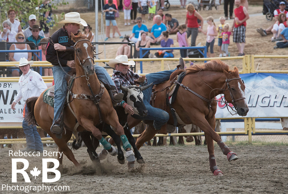 Bulldogging at the Mighty Fraser Pro Rodeo during Agrifair in Abbotsford B.C. July 31 - August 2, 2015.