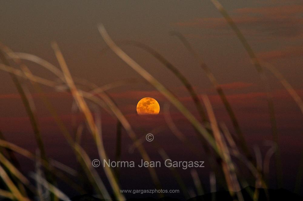 Grasslands cover the foothills of the Santa Rita Mountains north of Sonoita, Arizona, USA, in the Sonoran Desert.