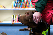 Dogs for the Disabled working with one of their dogs, Usher, at Stocklake Park School.