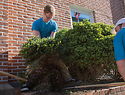 Evan Gass, a senior at Ohio university, pulls out a bush in front of City Hall with the help of Stuart Randle, right, also a senior at Ohio University, during Athens Beautification Day on April 17, 2016.