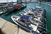 Rayglass Protector RIBs with Yamaha Outboards to be used as Official and Umpire Boats during the Louis Vuitton Pacific Series lined up at the Viaduct Harbour in Auckland. 24/1/2009