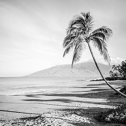 Curved bent palm tree black and white photo at Kamaole Beach Park with Maalaea Bay in Wailiea Kihei Maui Hawaii in the Hawaiian Islands. Copyright ⓒ 2019 Paul Velgos with All Rights Reserved.