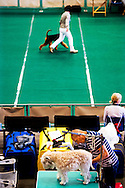 ROTTERDAM - Baasjes positioneren hun hond voorafgaand aan de verkiezingen tijdens de Internationale Hondententoonstelling in Rotterdam. Er wordt gestreden om de titels beste koppel, beste baby, beste pup en beste veteraan.
