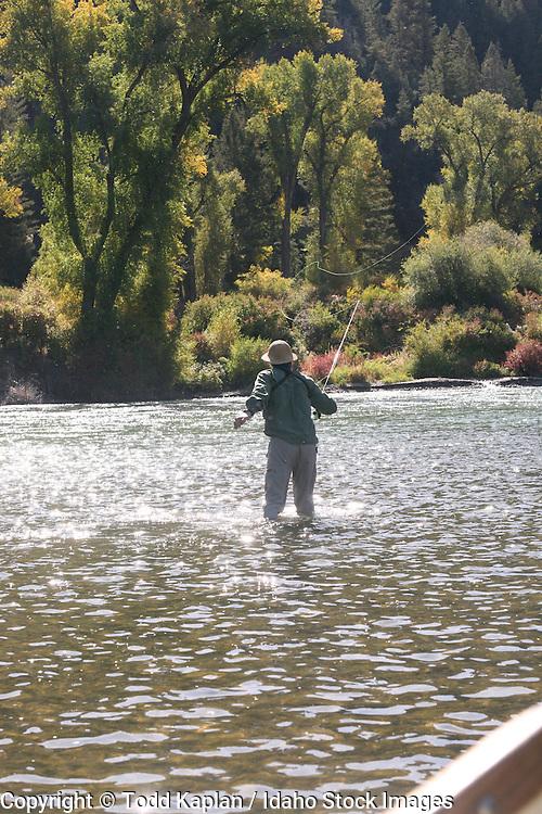 Idaho, Fly fishing, fall, casting backlit line, cottonwoods
