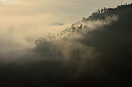 Gorillas in the Mist - Morning Mist in Bwindi Impenetrable Forest, Uganda, one of the world's few remaining gorilla habitats