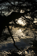 Photo Monterey Sunrise wall art. Cypress tree, sun rays, ocean, waves, rocks. Matted print, Pacific Grove, Central Coast, Southern California photography. Fine art photography limited edition.