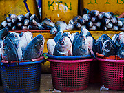 23 NOVEMBER 2017 - YANGON, MYANMAR: Fish for sale in the San Pya Fish Market. San Pya Fish Market is one of the largest fish markets in Yangon. It's a 24 hour market, but busiest early in the morning. Most of the fish in the market is wild caught but aquaculture is expanding in Myanmar and more farmed fresh water fish is being sold now than in the past.    PHOTO BY JACK KURTZ