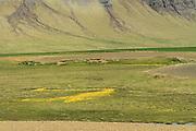 Iceland, snaefellsnes peninsula