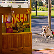 Dog waiting outside door of Ichiro's Japanese restaurant, Magnolia Village, Seattle, Washington