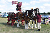 Class 19 - Pair of Heavy Horses in Harness with Vehicle