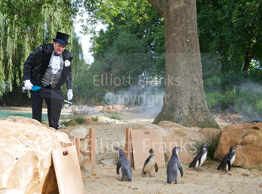 The Penguin from Batman Live meets Penguins from London Zoo<br /> <br /> Alex Giannini (53) who plays The Penguin in Batman Live <br /> <br /> at The Penguin Beach, London Zoo, London, Great Britain <br /> <br /> 22nd August 2011<br />  <br /> Photograph by Elliott Franks