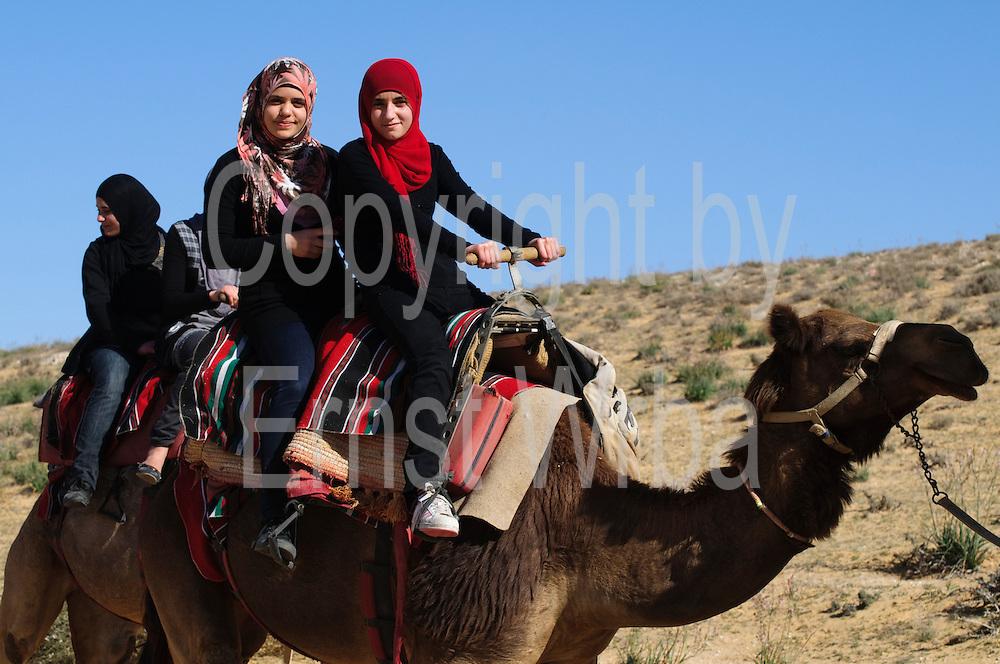 Kamel Reiten in der Wüste,Dromedare, Negev Camel Ranch bei Mamshit, Negev, Israel.|.riding on camels, Negev Camel Ranch, Negev, Israel.