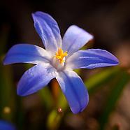 20110319 Spring Blooms
