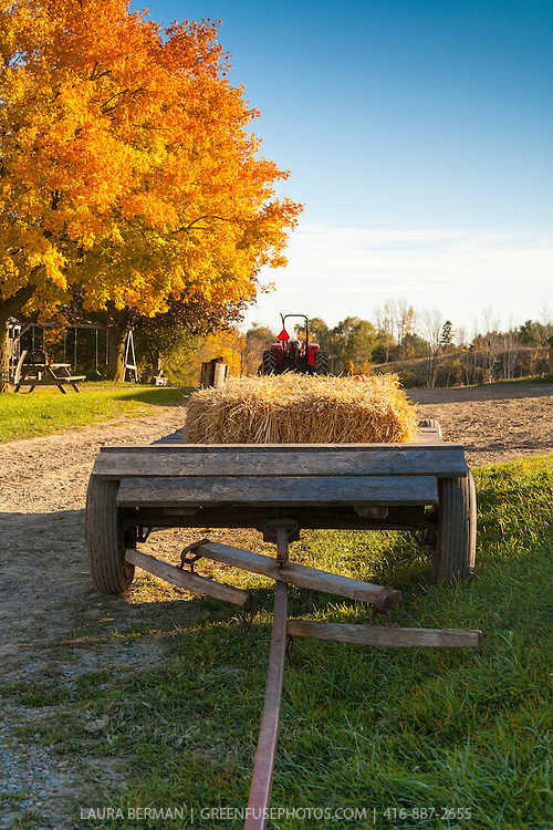 Bales of hay on a wooden farm wagon in front of a bright yellow maple tree against a clear blue sky.