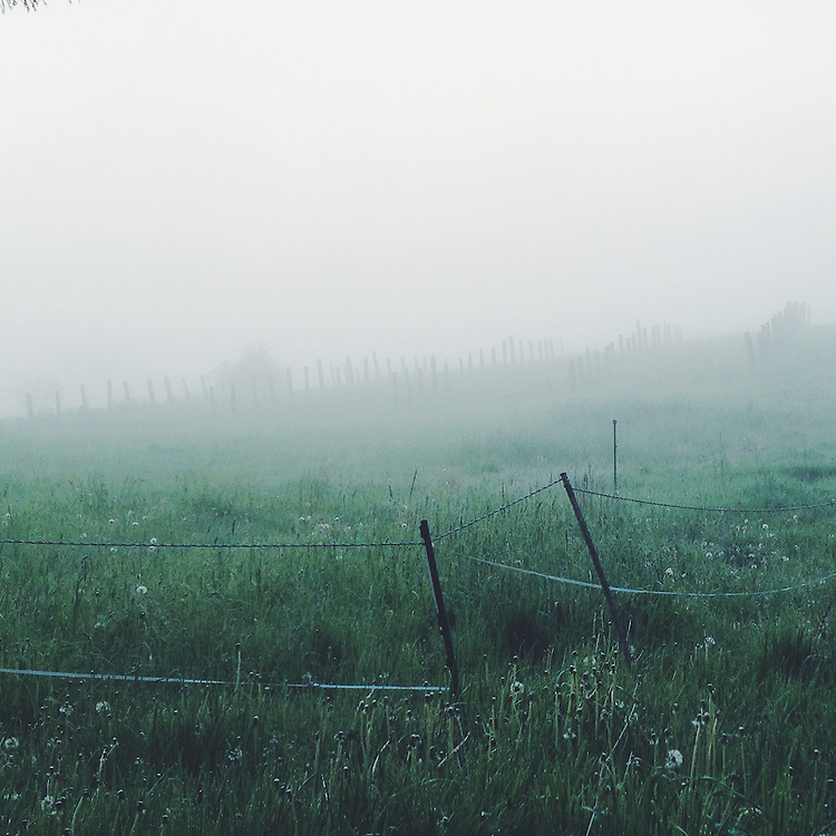 A foggy morning field. Taken with an iPhone