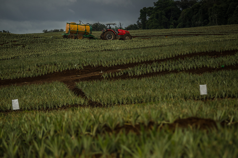 Pesticides are sprayed on pineapple crops at a private industrial farm in Costa Rica on January 13, 3014. Environmentalists claim the pineapple industry is contaminating the environment and local water supplies.