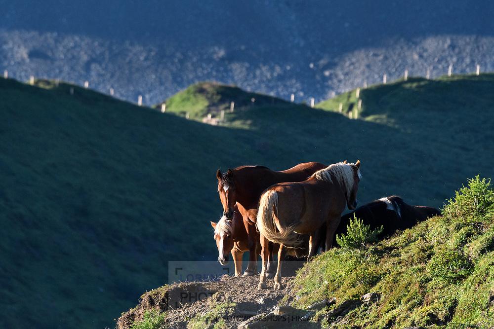 Pferde auf der Alp Stierva, Parc Ela, Graub&uuml;nden, Schweiz<br /> <br /> Horses on the alp Stierva, Parc Ela, Grisons, Switzerland