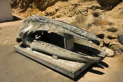 California: Whale skull at Point Reyes National Seashore near San Francisco. Photo copyright Lee Foster. Photo # casanf81231