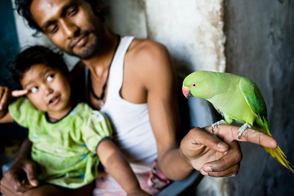 Father and daughter playing with a parrot. Varanasi.