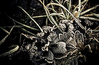 Leaves and grass iced with hoar frost, making a beautiful frozen bouquet.