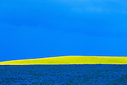 flax (blue) and canola (yellow) and stormy sky<br /> Portage La Prairie<br /> Manitoba<br /> Canada