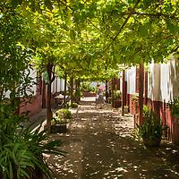 Fazenda Limoeiro, Bage, Rio Grande do Sul, Brasil, foto de Ze Paiva, Vista Imagens.