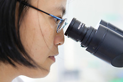 Professor Thuy looks through a microscope in a lab at the Vietnam Academy of Science and Technology (VAST) in Cau Giay District, Hanoi, Vietnam, Southeast Asia