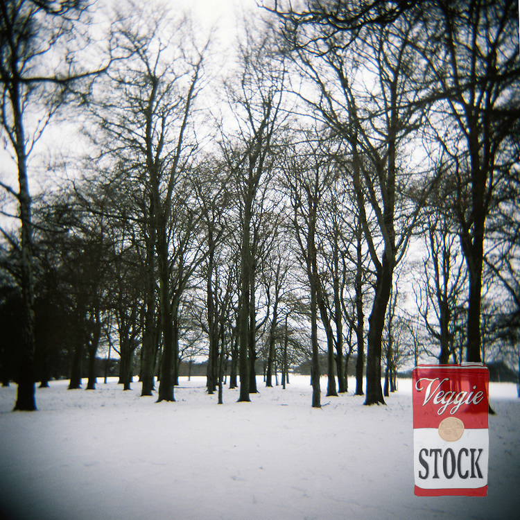 Snow in Phoenix Park, Dublin, Ireland, January 2010.