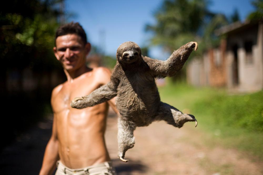 Sao Luis_MA, Brasil...Homen segurando  um bicho-preguica (Bradypus infuscatus) na comunidade Vila Olimpica...A man holding a sloth (Bradypus infuscatus) in the Vila Olimpica community...Foto: LEO DRUMOND /  NITRO