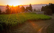 Soter Vineyards, Yamhill-Carlton AVA, Willamette Valley, Oregon