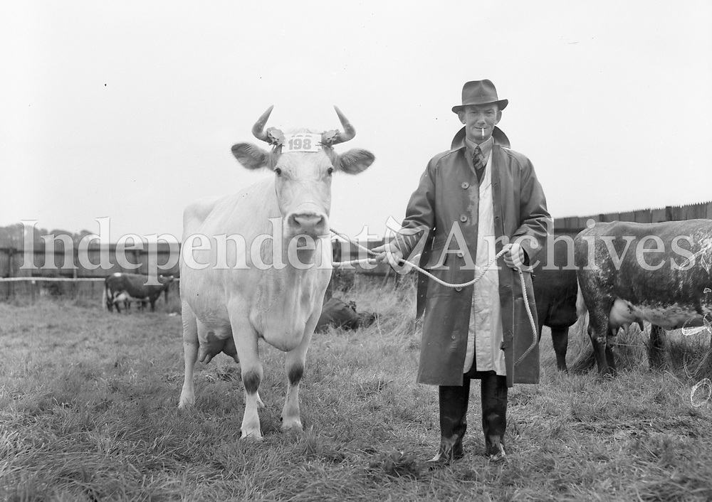 Cattle show. Date unknown. (Part of the Independent Ireland Newspapers/NLI Collection)