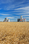Wheat field and grain elevators<br /> Lang<br /> Saskatchewan<br /> Canada