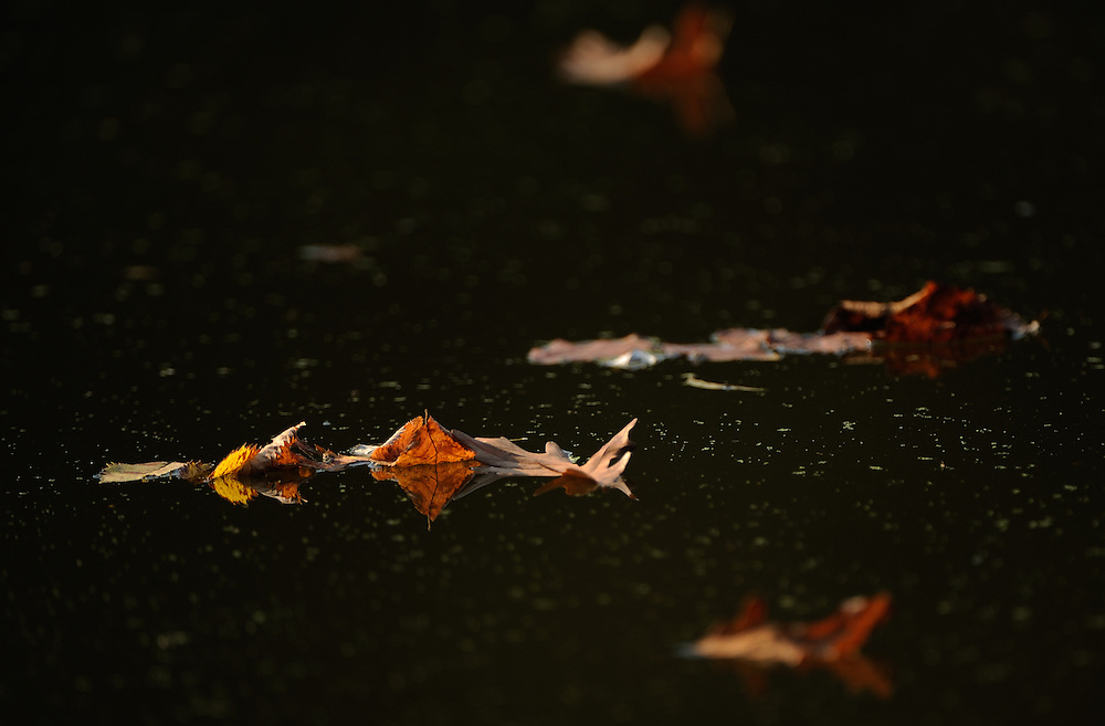 Leaves on the surface of a lake at Camp Wokanda near Peoria, Ill..