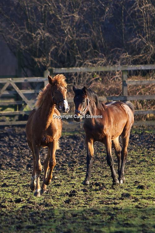 Jasmine and Flori 14 January 2012
