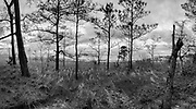 I made this multi-image panorama at the James Farm Ecological Preserve on the Indian River Bay. <br />
