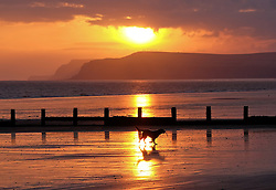 © Licensed to London News Pictures.26/10/15<br /> Redcar, UK. <br /> <br /> A dog runs amongst the sea defence groynes on Redcar beach as stunning colours light up the morning sky over cliffs along the Yorkshire coastline. <br /> <br /> Photo credit : Ian Forsyth/LNP
