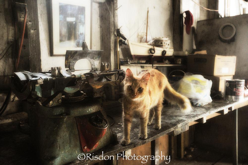 orange cat in dirty shop