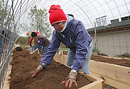 Marjorie Jeasen of Marion works on mixing up the peat moss and dirt in the planter during a Hoop House and Root Zone Heating Workshop at Prairiewoods in Hiawatha on Saturday October 6, 2012.