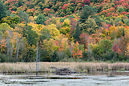 An old beaver lodge at the Beaver Pond during a great fall foliage display in Gatineau Park, Québec, Canada.  Photographed from the Gatineau Parkway during the Fall Rhapsody festival at Gatineau Park.