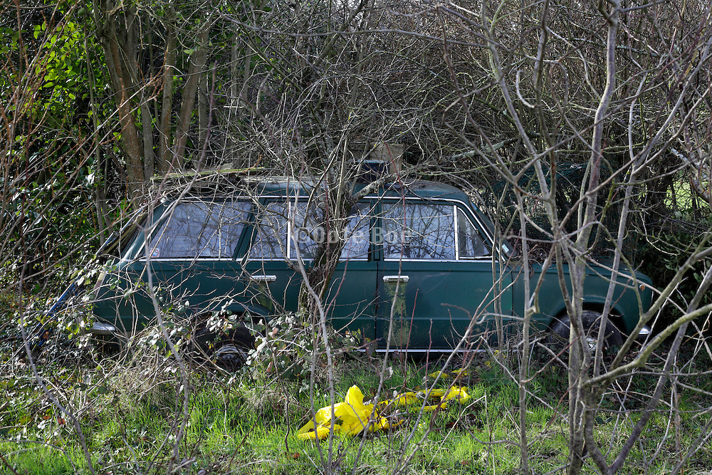 abandoned car being overgrown with weeds and trees