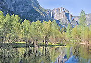 Yosemite Falls, Merced River and Early Spring Trees, Yosemite National Park, CA.