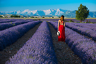 Europe, France, Provence, Valensole, woman in red in Lavender field, MR
