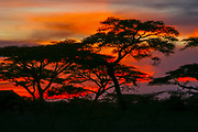 Red African Sunset photographed at Africa, Tanzania, Serengeti National Park