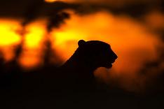 Kenya #4 2012